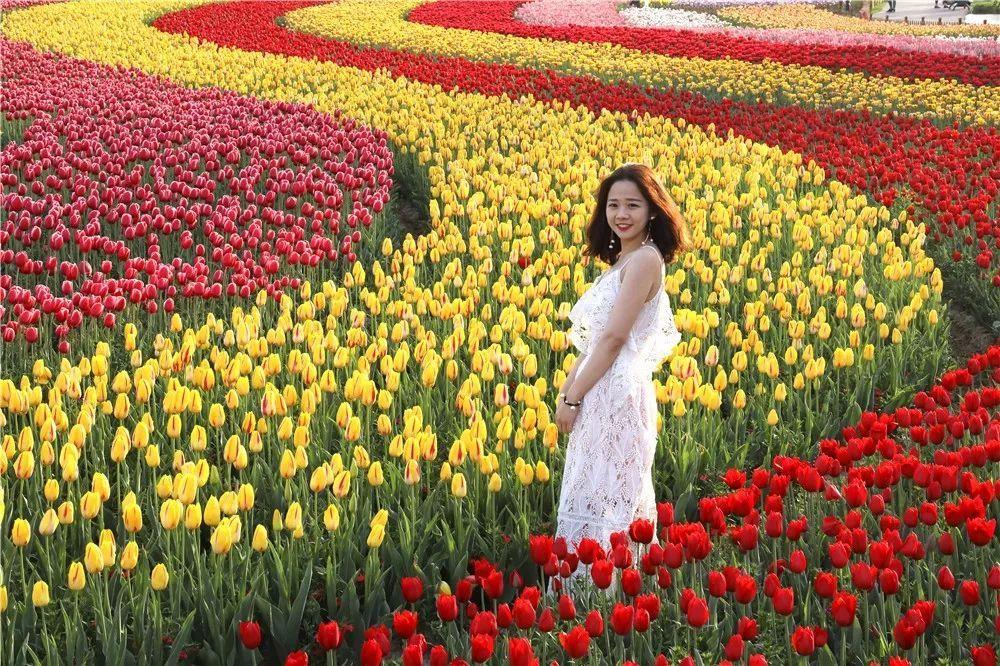 要闻 正文  08:00 荷兰花海 大片郁金香花海绽放 让这种五颜六色的美