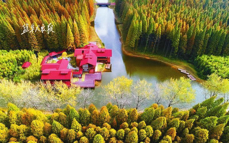 """秋日里的""""黄海森林公园""""色彩浓郁,风景如画.记者 王金成 摄"""